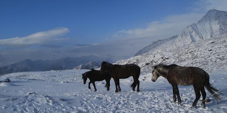 dzongri-winter-trek