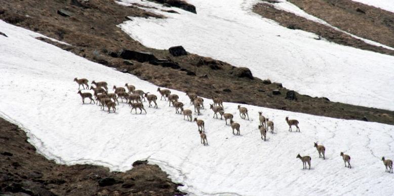 The Great Himalayan National Park