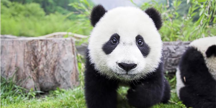 Top 10 Magnificent Himalayan Animals Peak Adventure Tours