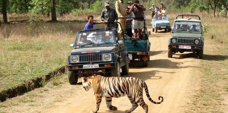kanha-national-park