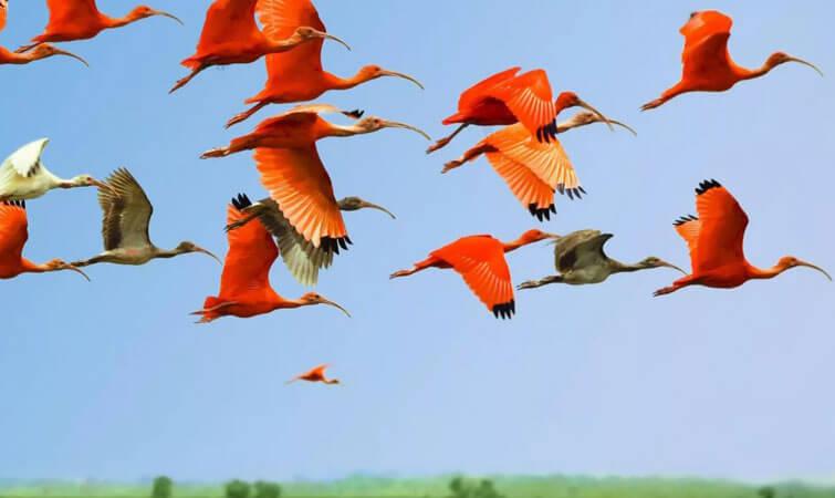 Bird Watching in India