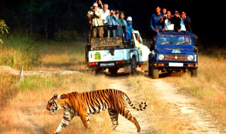 Wildlife Safari in India
