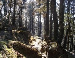 Jalori Pass Trekking