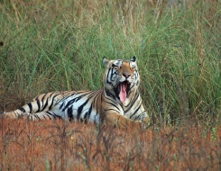 Kanha National Park Safari