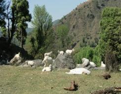 Mani Mahesh Kailash Trek