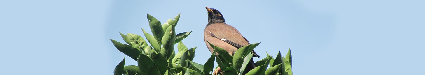 Birds in Jim Corbett National Park