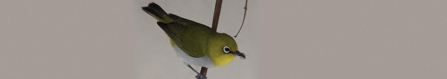 Birding Tours North India
