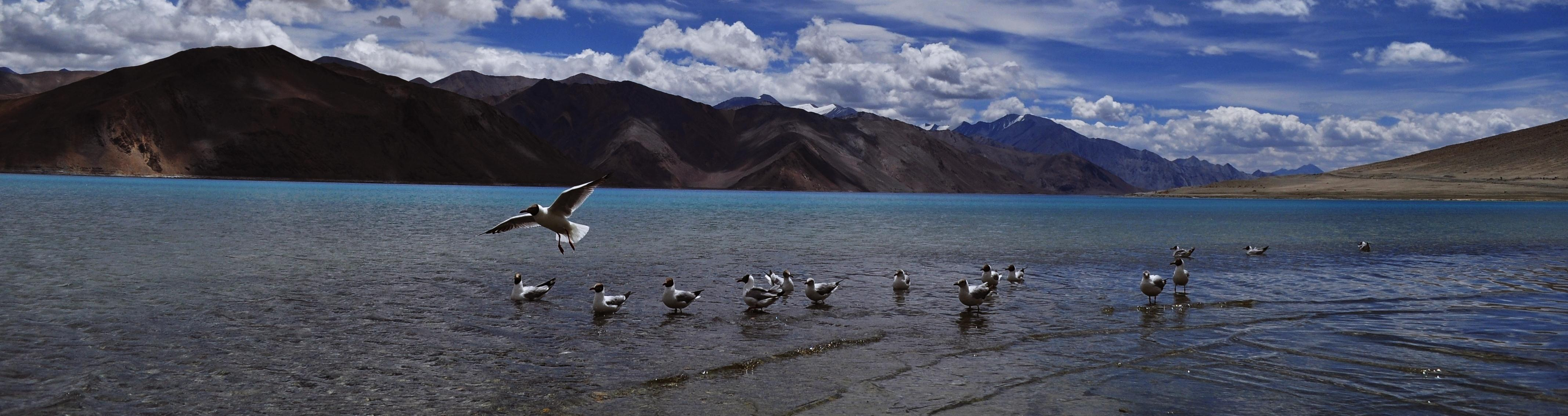 Birding Tours in Ladakh