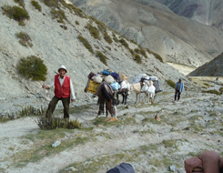 essay on trekking and operation